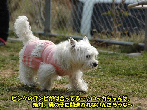 DSC_0372_20110403230621.jpg
