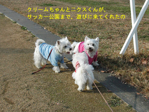 DSC_0377_20110207224716.jpg