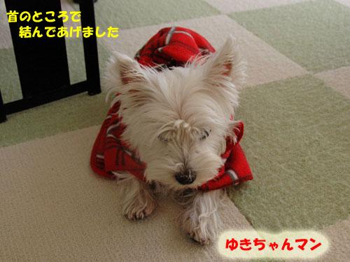 DSC_0395_20101107162536.jpg