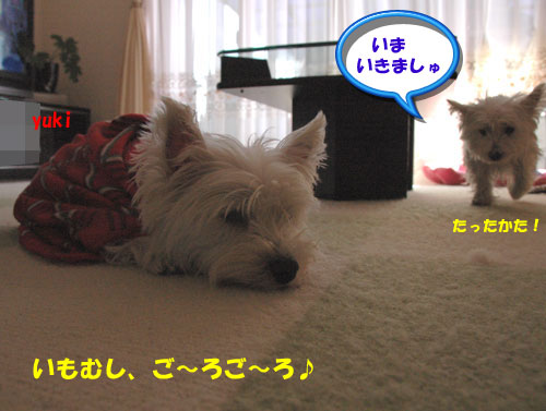 DSC_0396_20101107162536.jpg