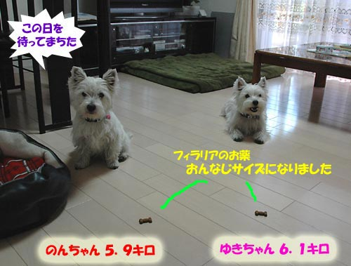 DSC_0494s.jpg