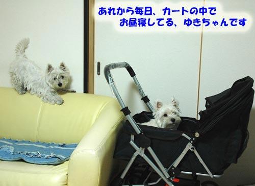 DSC_0508.jpg