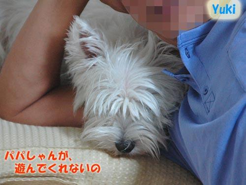 DSC_0670_20100718192140.jpg