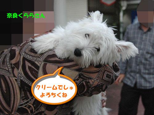 kuri-mu2.jpg