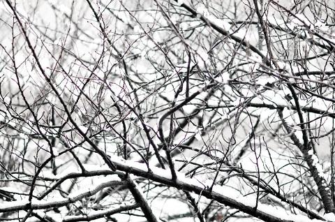111216雪の朝