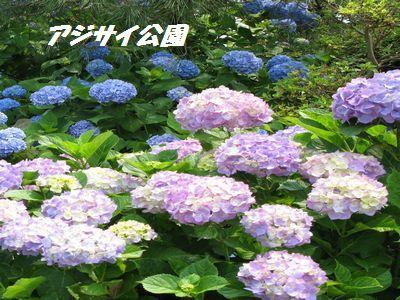 IMG_0899-1.jpg