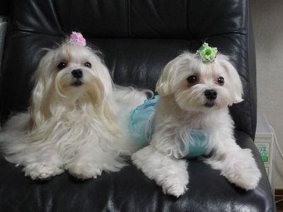 マナ&リコ