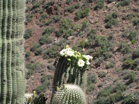 cactusflower.jpg