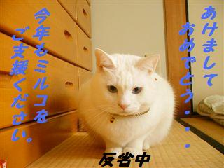 8-2_R.jpg