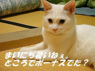 mir-1020-s.jpg