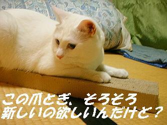 mir-1021-s.jpg