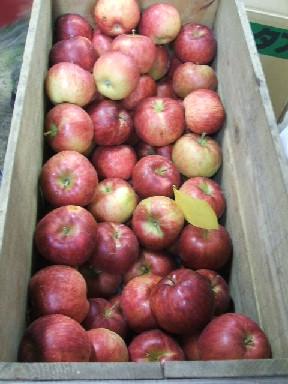 木箱リンゴ