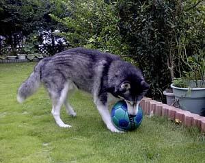 ball11.jpg