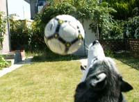 ball5214.jpg