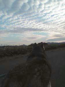 iwashiyoshi1.jpg
