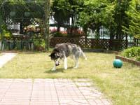 kanasobi5126.jpg