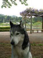 kouenhuji2.jpg