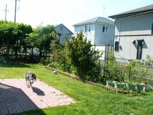 nakayasumi71.jpg