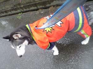 rainyoshi.jpg