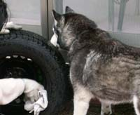 tire43.jpg