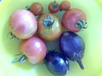 tomatonado.jpg