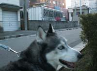 trayoshi1.jpg