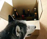 wine783.jpg