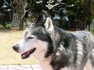 yoshi430.jpg