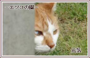 201105052158377c6.jpg