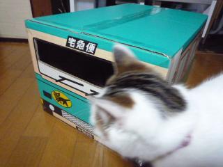 P1120094_convert_20100322110951.jpg