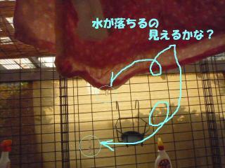 P1160599_convert_20100724142003.jpg