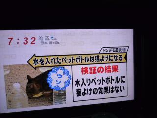 P1190270_convert_20101129114705.jpg