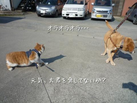 kako-V3i61zNi6LbB7UiY_convert_20110402163141.jpg