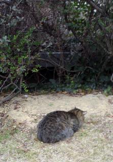 猫ガマン1