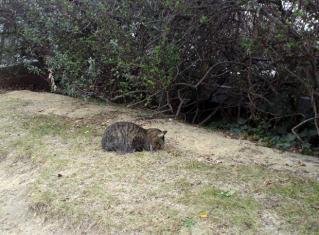 猫ガマン2