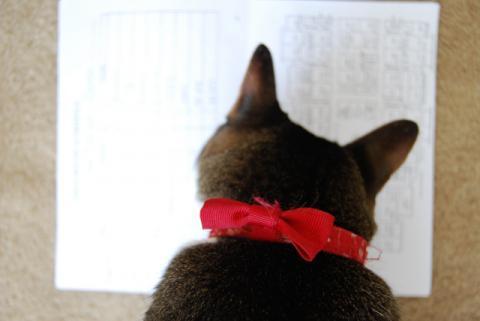紙には興味あり!