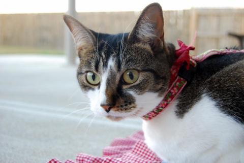 猫アンテナ のびた?