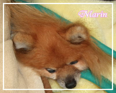 marin2.jpg