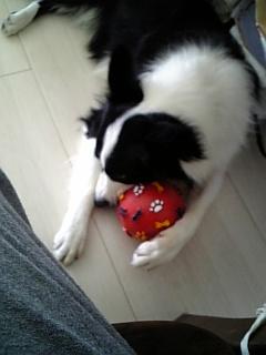 ボールで遊ぶディマジオ。