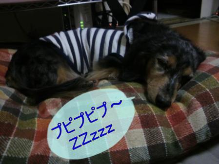 2010112120450002.jpg