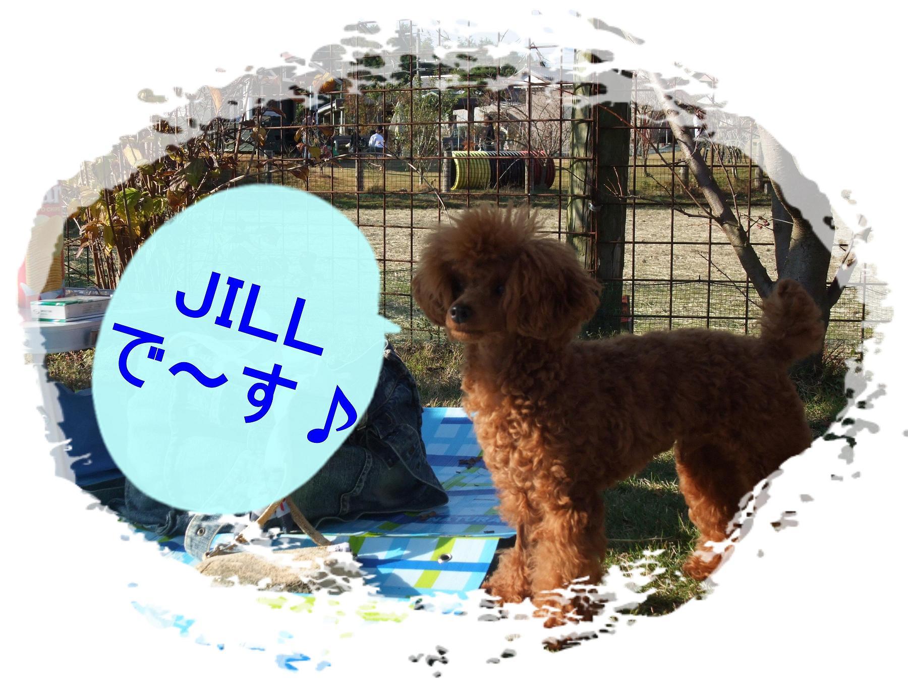 JILL君