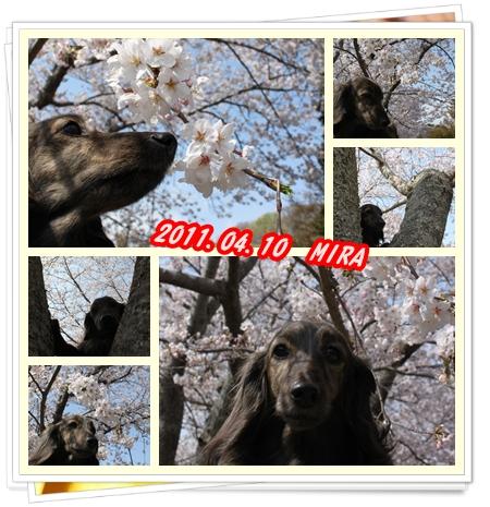MIRA_20110411111643.jpg