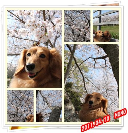 MOMO_20110411111644.jpg