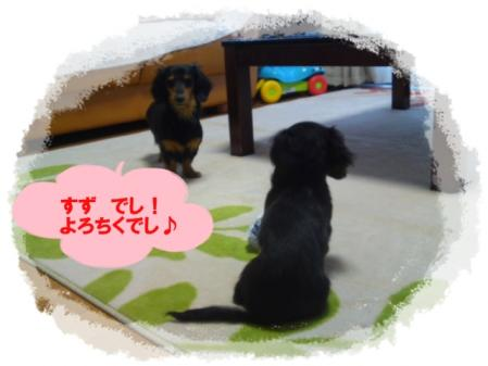 mini_110207_0658.jpg