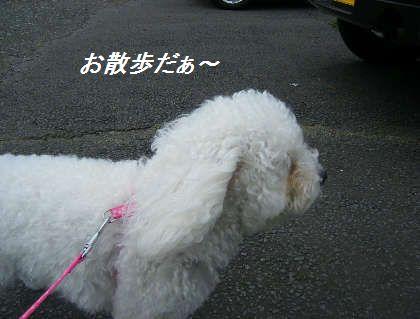 2008_09060016.jpg