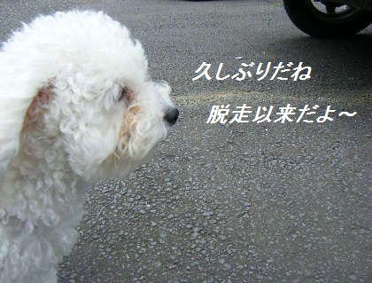 2008_09060017.jpg