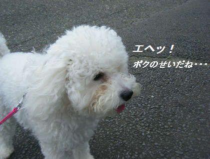 2008_09060018.jpg