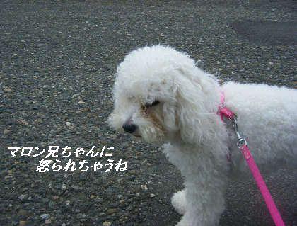 2008_09060020.jpg