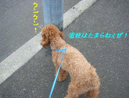 2008_09060026.jpg