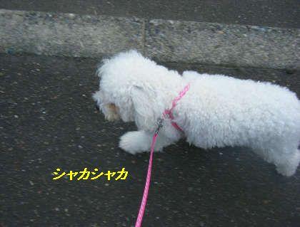 2008_09060029.jpg